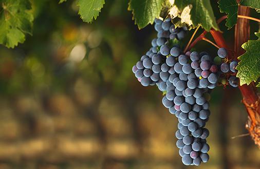 Harfang avocats - Droit viticole
